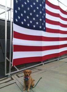 Big Flag Little Pup