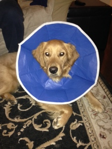 Tucker's Cone After Surgery