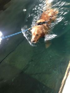 Tucker can swim!